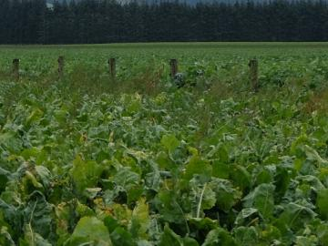 Image of crops