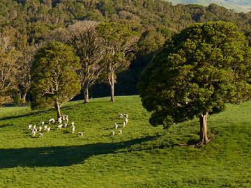 image of sheep onfarm