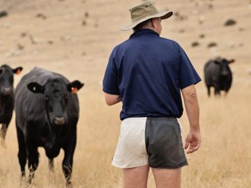 farmer herd