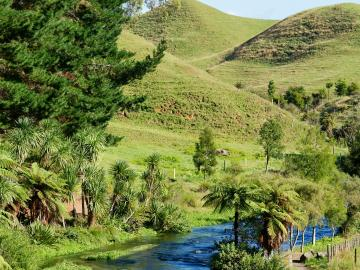 Image of river through Waikato farm.