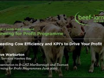 Breeding Cow Efficiency to Drive Your Profit