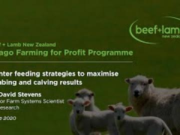 Winter Feeding Strategies to maximise lambing and calving results