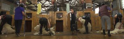 shearing shed