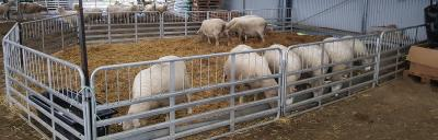 Image of lambing pen