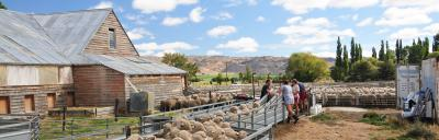 image of sheep in yards