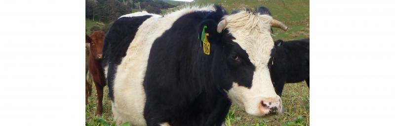 Regulatory changes impact livestock management procedures
